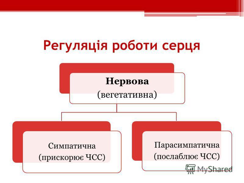 Регуляція роботи серця Нервова (вегетативна) Симпатична (прискорює ЧСС) Парасимпатична (послаблює ЧСС)
