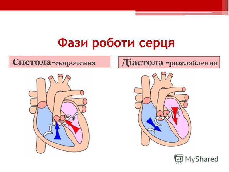 Фази роботи серця Систола - скорочення Діастола - розслаблення