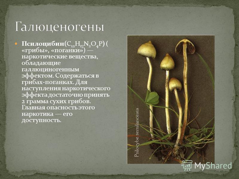 Псилоцибин(C 12 H 17 N 2 O 4 P) ( «грибы», «поганки») наркотические вещества, обладающие галлюциногенным эффектом. Содержаться в грибах-поганках. Для наступления наркотического эффекта достаточно принять 2 грамма сухих грибов. Главная опасность этого