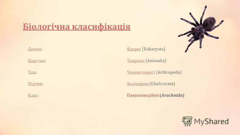 Біологічна класифікація ДоменДомен:ЯдерніЯдерні (Eukaryota) ЦарствоЦарство:ТвариниТварини (Animalia) ТипТип:ЧленистоногіЧленистоногі (Arthropoda) ПідтипПідтип:ХеліцеровіХеліцерові (Chelicerata) КласКлас:Павукоподібні (Arachnida)