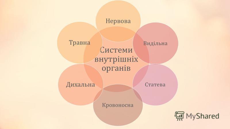 Системи внутрішніх органів Нервова ВидільнаСтатеваКровоносна ДихальнаТравна