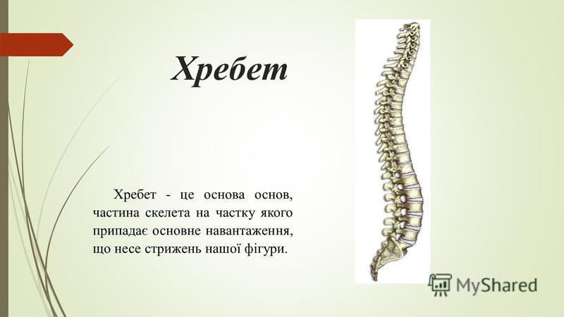 Хребет Хребет - це основа основ, частина скелета на частку якого припадає основне навантаження, що несе стрижень нашої фігури.