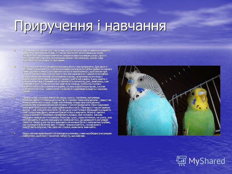 Приручення і навчання У природі зустрічаються такі птиці, які без всякої підготовки наслідують крикам і співу інших птиць, а також здатні імітувати людську мову. Вважається, що можна вивчити говорити лише великих папуг, проте часто вивчають цьому і м
