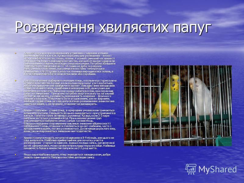 Розведення хвилястих папуг Хвилясті папужки при правильному утриманні і годуванні успішно розмножуються в клітках. Краща пора року для розведення – весна і літо, коли багато світла, тепло, зелень. У осінній і зимовий час хвилясті папужки теж можуть в