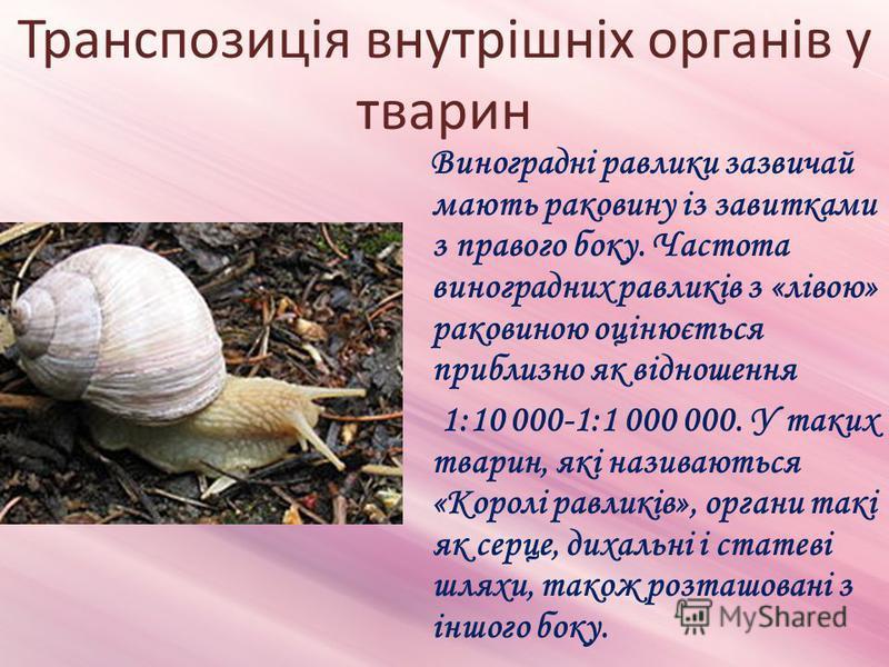 Транспозиція внутрішніх органів у тварин Виноградні равлики зазвичай мають раковину із завитками з правого боку. Частота виноградних равликів з «лівою» раковиною оцінюється приблизно як відношення 1:10 000-1:1 000 000. У таких тварин, які називаються