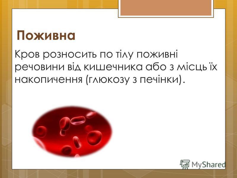 Поживна Кров розносить по тілу поживні речовини від кишечника або з місць їх накопичення (глюкозу з печінки).