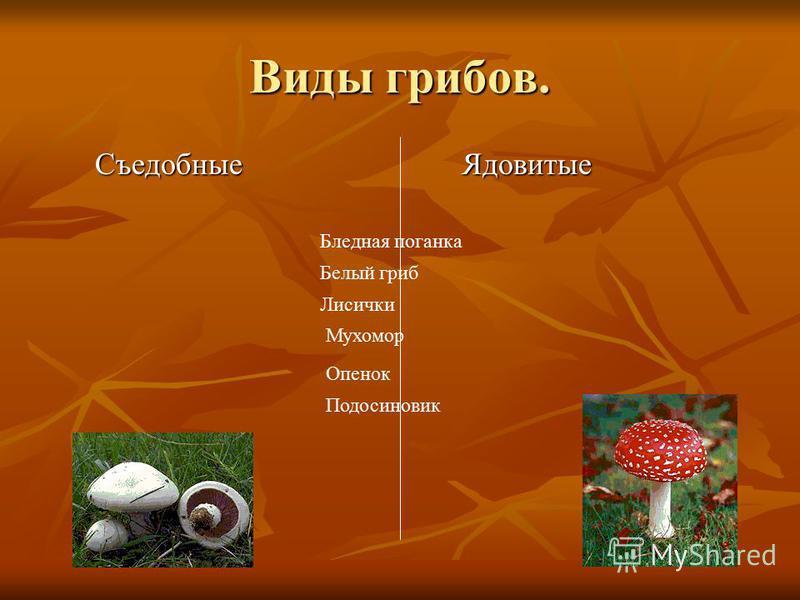 Виды грибов. Съедобные Съедобные Ядовитые Ядовитые Бледная поганка Белый гриб Лисички Мухомор Опенок Подосиновик
