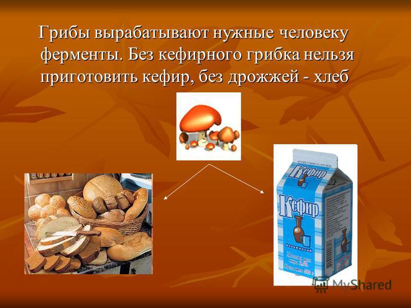 Грибы вырабатывают нужные человеку ферменты. Без кефирного грибка нельзя приготовить кефир, без дрожжей - хлеб Грибы вырабатывают нужные человеку ферменты. Без кефирного грибка нельзя приготовить кефир, без дрожжей - хлеб