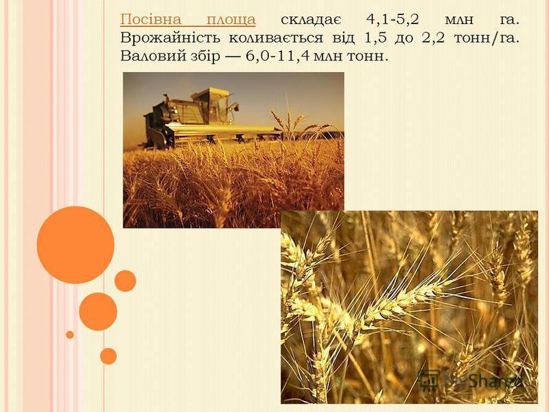 Посівна площаПосівна площа складає 4,1-5,2 млн га. Врожайність коливається від 1,5 до 2,2 тонн/га. Валовий збір 6,0-11,4 млн тонн.