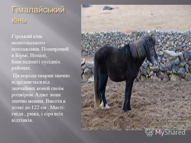 Гірський кінь монгольського походження. Поширений в Бірмі, Непалі, Бангладеші і сусідніх районах. Ця порода тварин значно відрізняється від звичайних коней своїм розміром. Адже вона значно менша. Висота в холкі до 122 см. Масті : гніда, рижа, і сіра