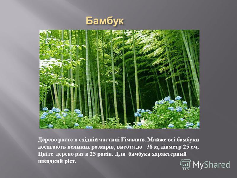 Дерево росте в східній частині Гімалаїв. Майже всі бамбуки досягають великих розмірів, висота до 38 м, діаметр 25 см, Цвіте дерево раз в 25 років. Для бамбука характерний швидкий ріст.
