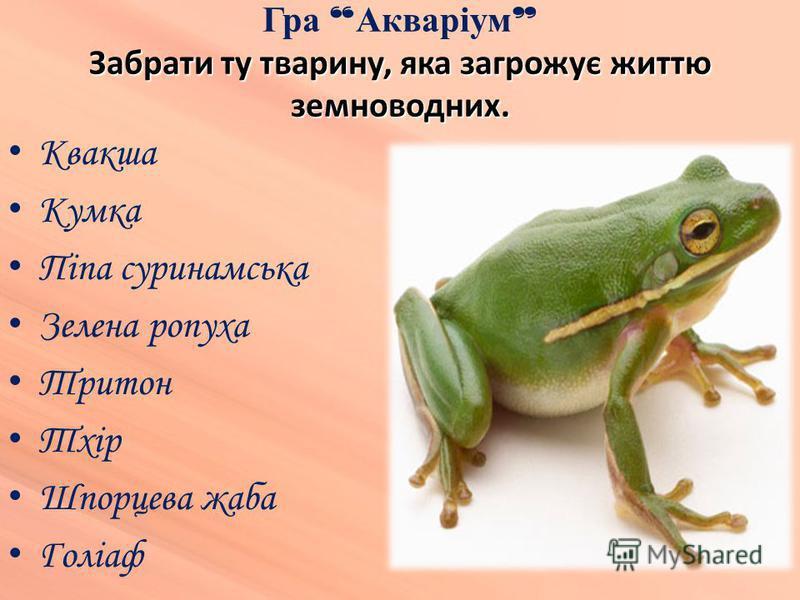 Квакша Кумка Піпа суринамська Зелена ропуха Тритон Тхір Шпорцева жаба Голіаф Забрати ту тварину, яка загрожує життю земноводних. Гра Акваріум Забрати ту тварину, яка загрожує життю земноводних.