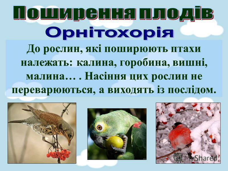 До рослин, які поширюють птахи належать: калина, горобина, вишні, малина…. Насіння цих рослин не переварюються, а виходять із послідом.