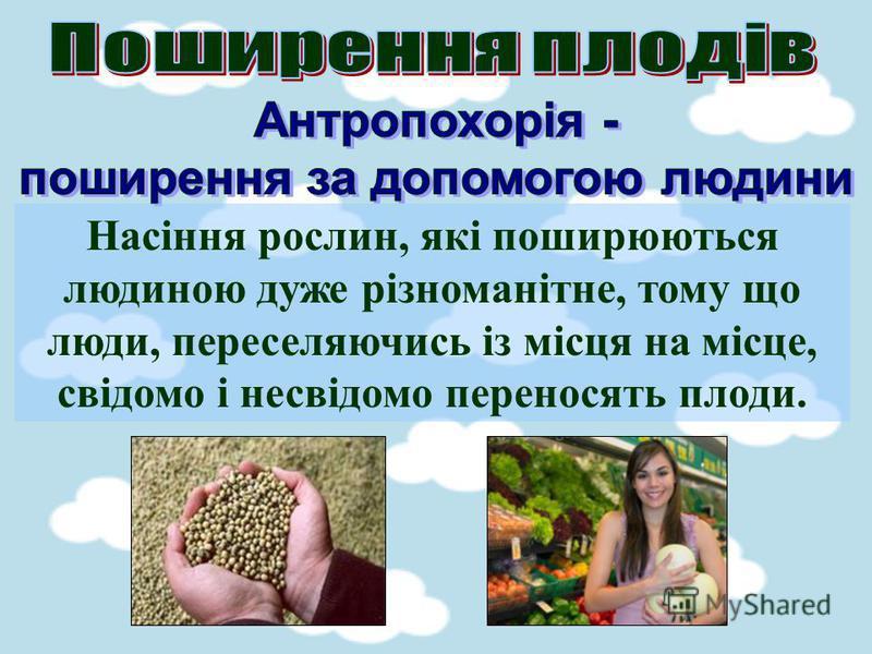 Насіння рослин, які поширюються людиною дуже різноманітне, тому що люди, переселяючись із місця на місце, свідомо і несвідомо переносять плоди.
