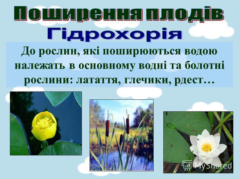 До рослин, які поширюються водою належать в основному водні та болотні рослини: латаття, глечики, рдест…