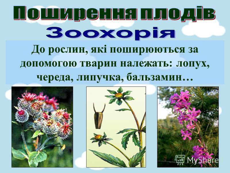До рослин, які поширюються за допомогою тварин належать: лопух, череда, липучка, бальзамин…