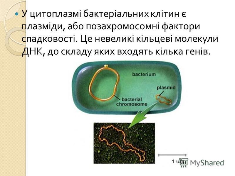 У цитоплазмі бактеріальних клітин є плазміди, або позахромосомні фактори спадковості. Це невеликі кільцеві молекули ДНК, до складу яких входять кілька генів.