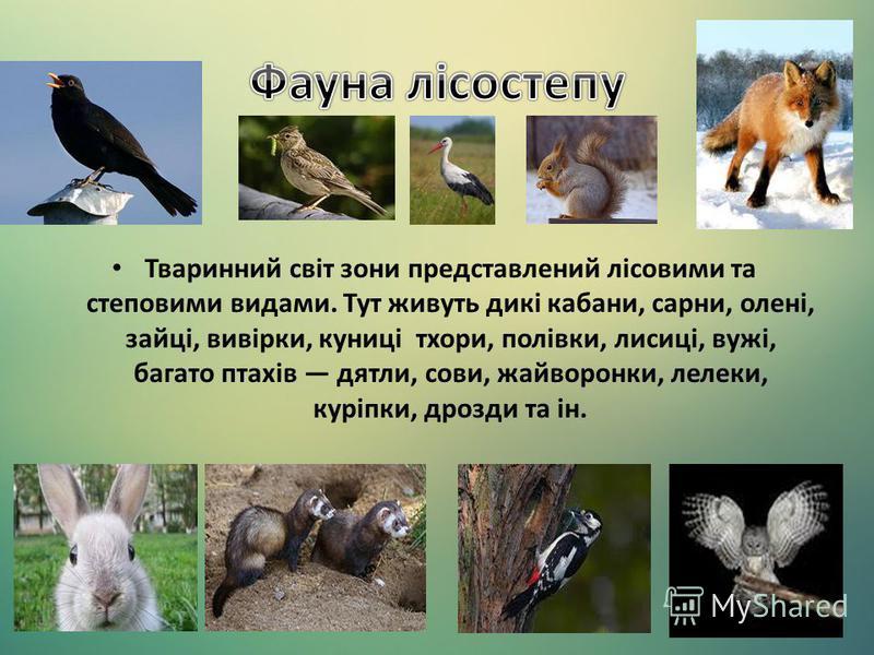 Тваринний світ зони представлений лісовими та степовими видами. Тут живуть дикі кабани, сарни, олені, зайці, вивірки, куниці тхори, полівки, лисиці, вужі, багато птахів дятли, сови, жайворонки, лелеки, куріпки, дрозди та ін.