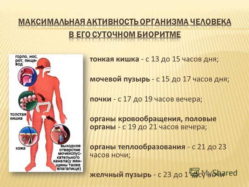 тонкая кишка - с 13 до 15 часов дня; мочевой пузырь - с 15 до 17 часов дня; почки - с 17 до 19 часов вечера; органы кровообращения, половые органы - с 19 до 21 часов вечера; органы теплообразования - с 21 до 23 часов ночи; желчный пузырь - с 23 до 1