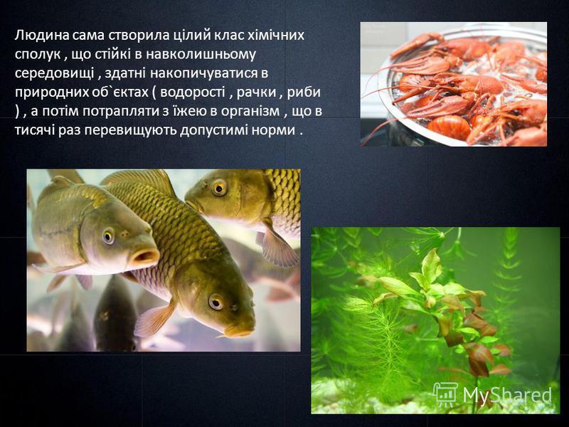 Людина сама створила цілий клас хімічних сполук, що стійкі в навколишньому середовищі, здатні накопичуватися в природних об`єктах ( водорості, рачки, риби ), а потім потрапляти з їжею в організм, що в тисячі раз перевищують допустимі норми.