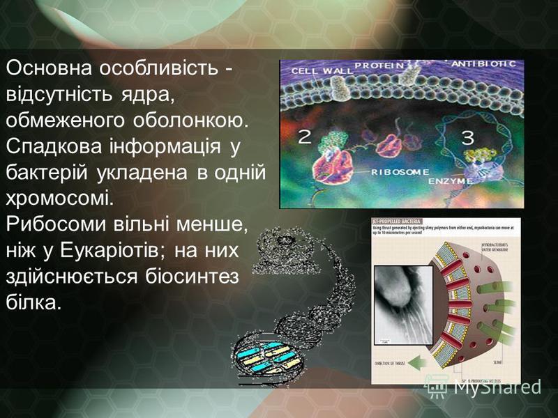 Основна особливість - відсутність ядра, обмеженого оболонкою. Спадкова інформація у бактерій укладена в одній хромосомі. Рибосоми вільні менше, ніж у Еукаріотів; на них здійснюється біосинтез білка.