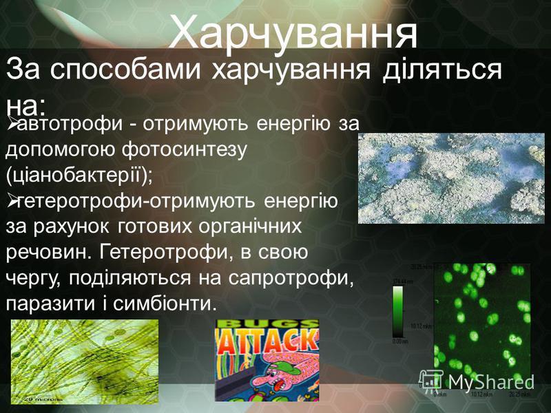 Харчування автотрофи - отримують енергію за допомогою фотосинтезу (ціанобактерії); гетеротрофи-отримують енергію за рахунок готових органічних речовин. Гетеротрофи, в свою чергу, поділяються на сапротрофи, паразити і симбіонти. За способами харчуванн