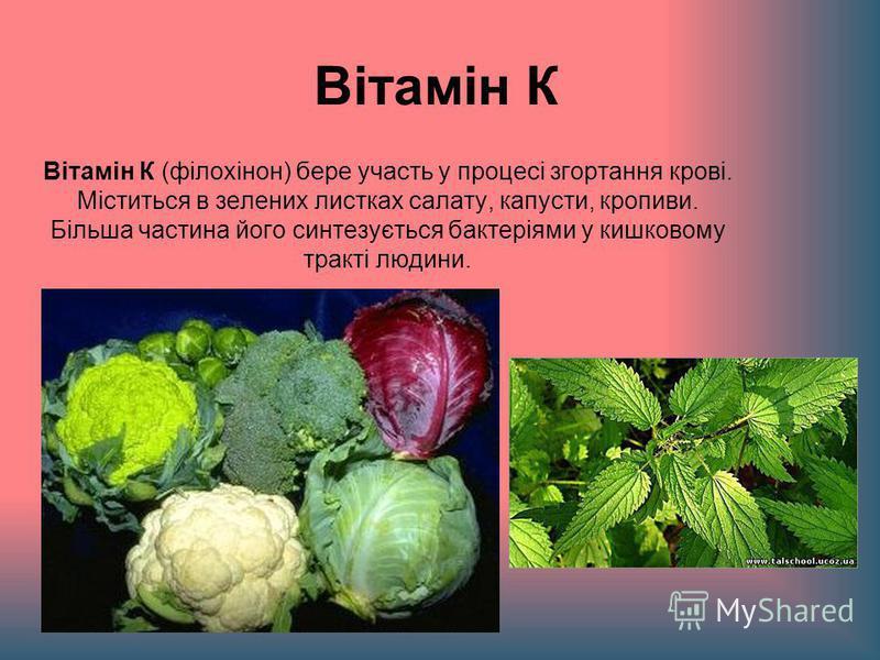 Вітамін К Вітамін К (філохінон) бере участь у процесі згортання крові. Міститься в зелених листках салату, капусти, кропиви. Більша частина його синтезується бактеріями у кишковому тракті людини.