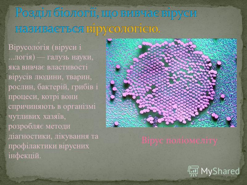 Вірусоло́гія (віруси і...логія) галузь науки, яка вивчає властивості вірусів людини, тварин, рослин, бактерій, грибів і процеси, котрі вони спричиняють в організмі чутливих хазяїв, розробляє методи діагностики, лікування та профілактики вірусних інфе