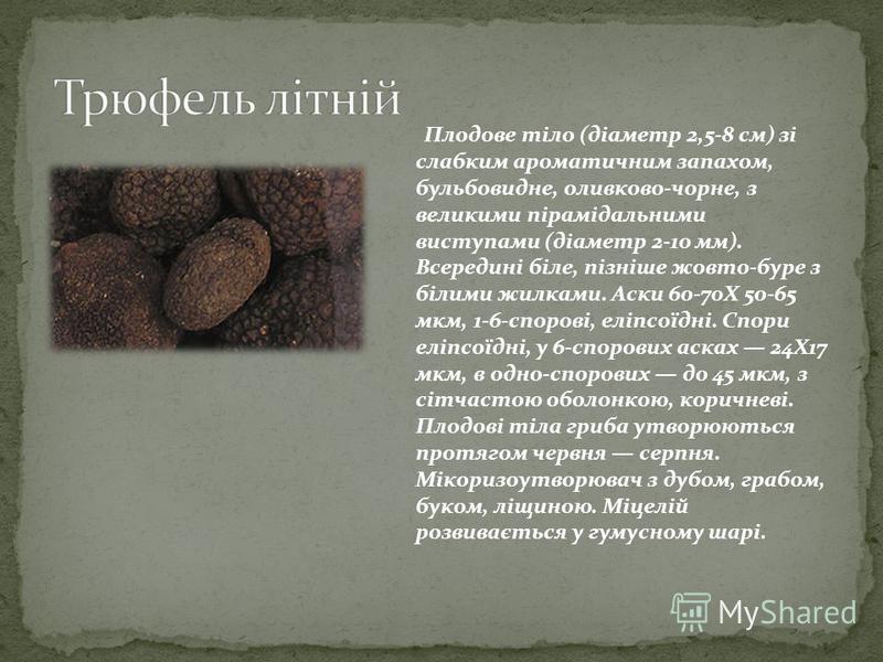 Плодове тіло (діаметр 2,5-8 см) зі слабким ароматичним запахом, бульбовидне, оливково-чорне, з великими пірамідальними виступами (діаметр 2-10 мм). Всередині біле, пізніше жовто-буре з білими жилками. Аски 60-70Х 50-65 мкм, 1-6-спорові, еліпсоїдні. С