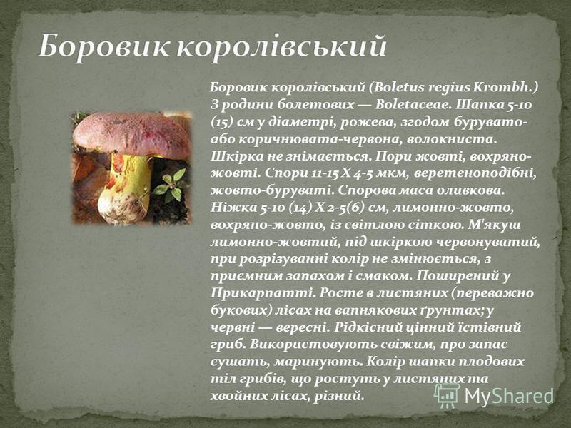 Боровик королівський (Boletus regius Krombh.) З родини болетових Boletaceae. Шапка 5-10 (15) см у діаметрі, рожева, згодом бурувато- або коричнювата-червона, волокниста. Шкірка не знімається. Пори жовті, вохряно- жовті. Спори 11-15 Х 4-5 мкм, веретен