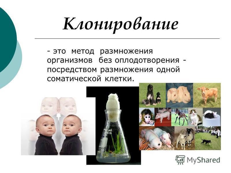 Клонирование - это метод размножения организмов без оплодотворения - посредством размножения одной соматической клетки.