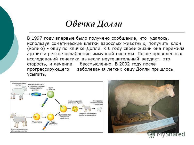 В 1997 году впервые было получено сообщение, что удалось, используя соматические клетки взрослых животных, получить клон (копию) - овцу по кличке Долли. К 6 году своей жизни она пережила артрит и резкое ослабление иммунной системы. После проведенных