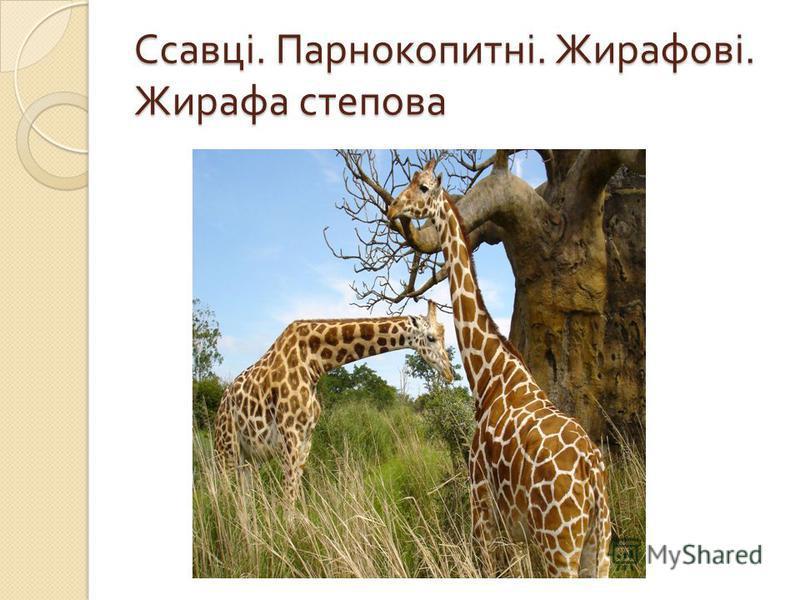 Ссавці. Парнокопитні. Жирафові. Жирафа степова