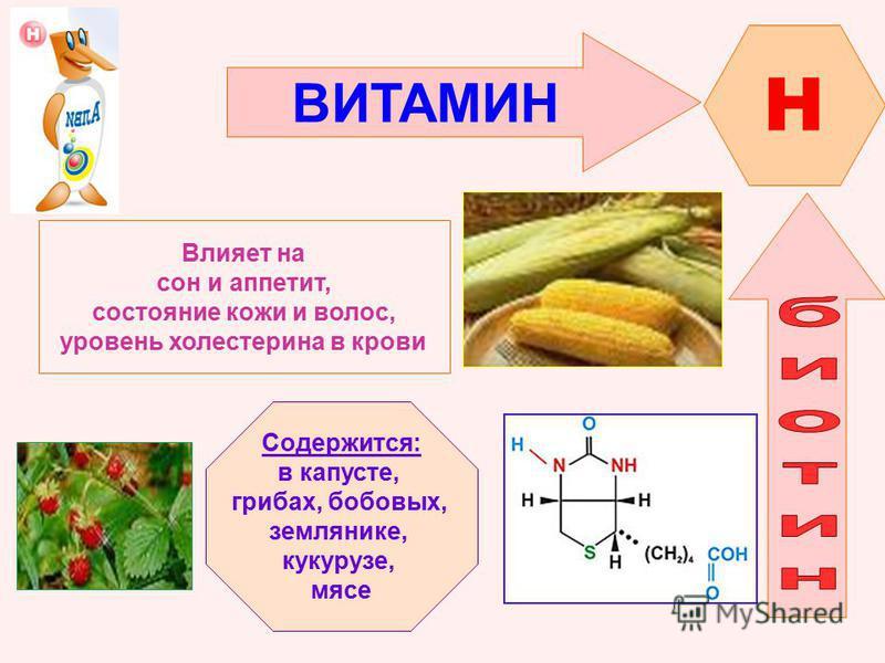ВИТАМИН H Влияет на сон и аппетит, состояние кожи и волос, уровень холестерина в крови Содержится: в капусте, грибах, бобовых, землянике, кукурузе, мясе