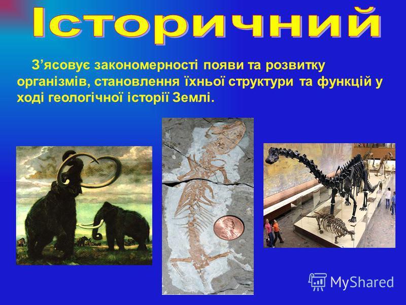 Зясовує закономерності появи та розвитку організмів, становлення їхньої структури та функцій у ході геологічної історії Землі.