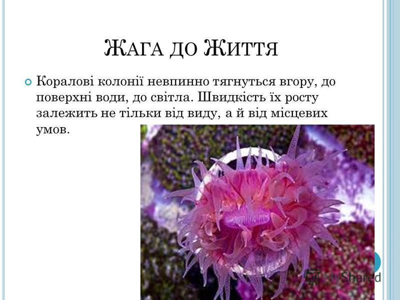 Ж АГА ДО Ж ИТТЯ Коралові колонії невпинно тягнуться вгору, до поверхні води, до світла. Швидкість їх росту залежить не тільки від виду, а й від місцевих умов.
