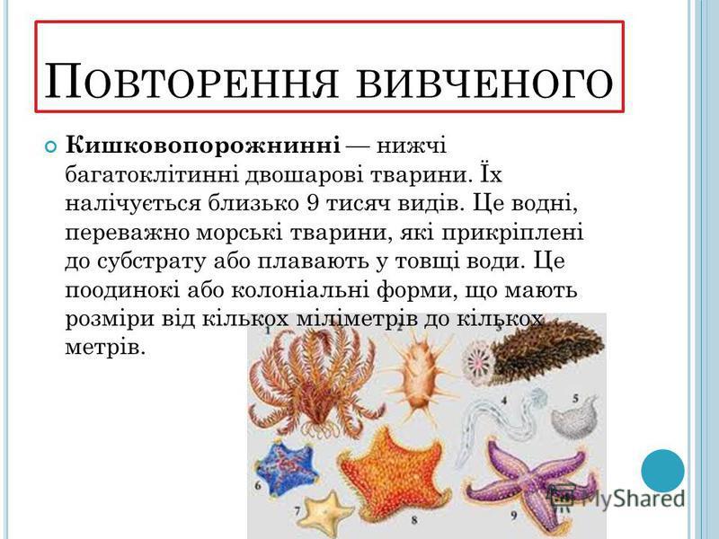 П ОВТОРЕННЯ ВИВЧЕНОГО Кишковопорожнинні нижчі багатоклітинні двошарові тварини. Їх налічується близько 9 тисяч видів. Це водні, переважно морські тварини, які прикріплені до субстрату або плавають у товщі води. Це поодинокі або колоніальні форми, що