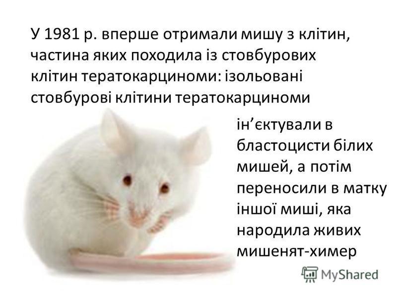 У 1981 р. вперше отримали мишу з клітин, частина яких походила із стовбурових клітин тератокарциноми: ізольовані стовбурові клітини тератокарциноми інєктували в бластоцисти білих мишей, а потім переносили в матку іншої миші, яка народила живих мишеня