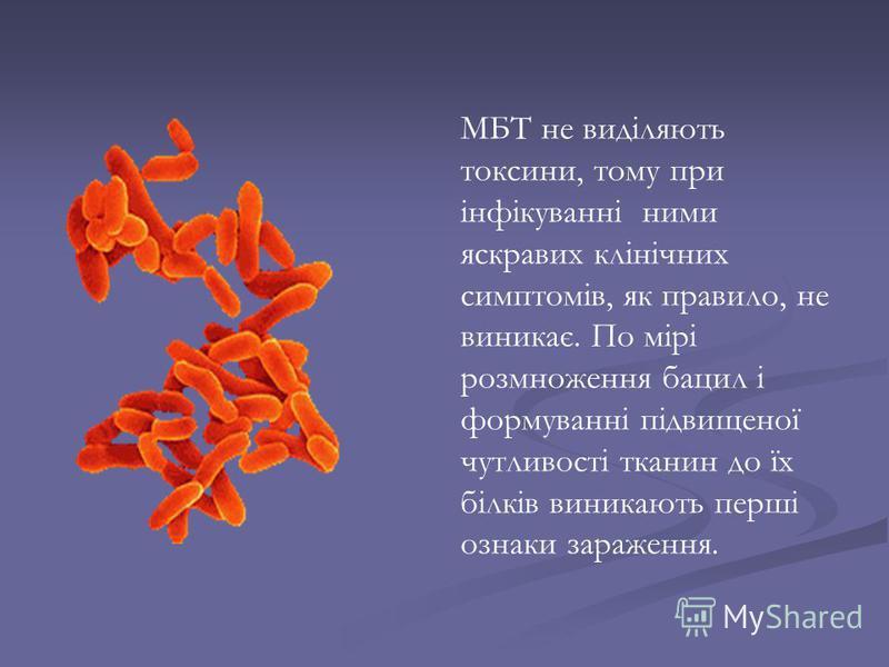 МБТ не виділяють токсини, тому при інфікуванні ними яскравих клінічних симптомів, як правило, не виникає. По мірі розмноження бацил і формуванні підвищеної чутливості тканин до їх білків виникають перші ознаки зараження.