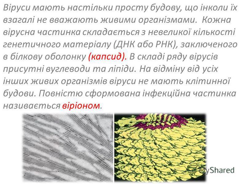 Віруси мають настільки просту будову, що інколи їх взагалі не вважають живими організмами. Кожна вірусна частинка складається з невеликої кількості генетичного матеріалу (ДНК або РНК), заключеного в білкову оболонку (капсид). В складі ряду вірусів пр