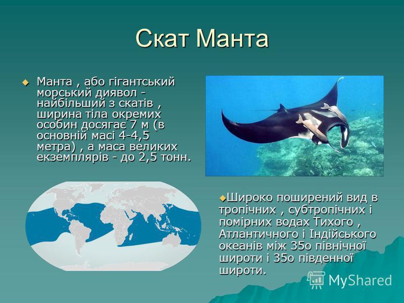 Скат Манта Манта, або гігантський морський диявол - найбільший з скатів, ширина тіла окремих особин досягає 7 м (в основній масі 4-4,5 метра), а маса великих екземплярів - до 2,5 тонн. Манта, або гігантський морський диявол - найбільший з скатів, шир