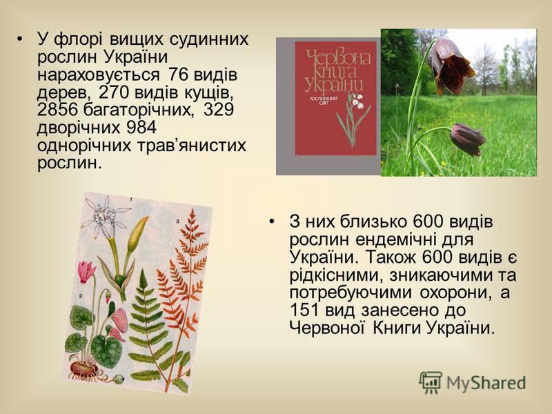 У флорі вищих судинних рослин України нараховується 76 видів дерев, 270 видів кущів, 2856 багаторічних, 329 дворічних 984 однорічних травянистих рослин. З них близько 600 видів рослин ендемічні для України. Також 600 видів є рідкісними, зникаючими та