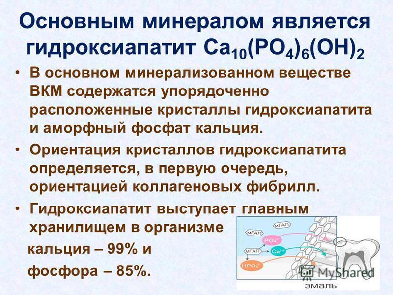 Основным минералом является гидроксиапатит Ca 10 (PO 4 ) 6 (OH) 2 В основном минерализованном веществе ВКМ содержатся упорядоченно рацположенные кристаллы гидроксиапатита и аморфный фосфат кальция. Ориентация кристаллов гидроксиапатита определяется,