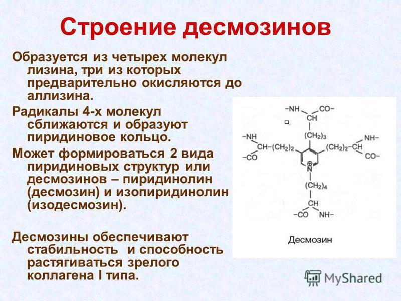 Строение десмозинов Образуется из четырех молекул лизина, три из которых предварительно окисляются до лизинга. Радикалы 4-х молекул сближаются и образуют пиридиновое кольцо. Может формироваться 2 вида пиридиновых структур или десмозинов – пиридинолин