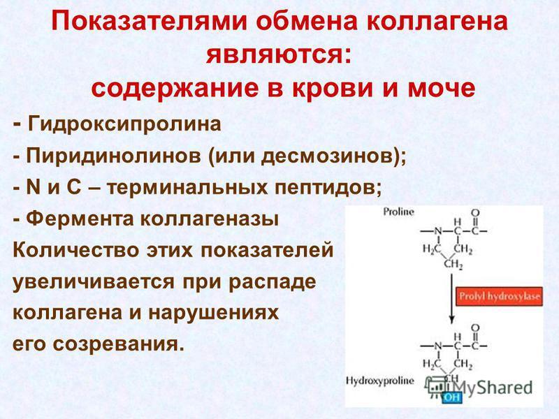 Показателями обмена коллагена являются: содержание в крови и моче - Гидроксипролина - Пиридинолинов (или десмозинов); - N и С – терминальных пептидов; - Фермента коллагеназы Количество этих показателей увеличивается при рацпаде коллагена и нарушениях