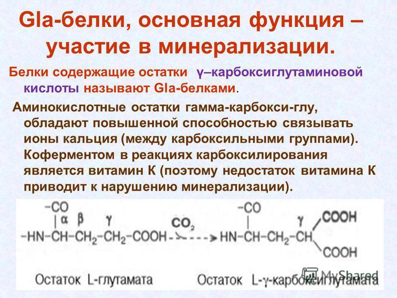 Gla-белки, основная функция – участие в минерализации. Белки содержащие остатки γ–карбоксиглутаминовой кислоты называют Gla-белками. Аминокислотные остатки гамма-карбокси-глу, обладают повышенной способностью связывать ионы кальция (между карбоксильн
