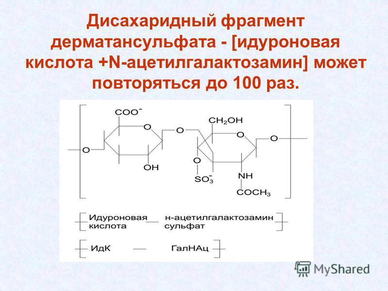 Дисахаридный фрагмент дерматансульфата - [идуроновая кислота +N-ацетилгалактозамин] может повторяться до 100 раз.