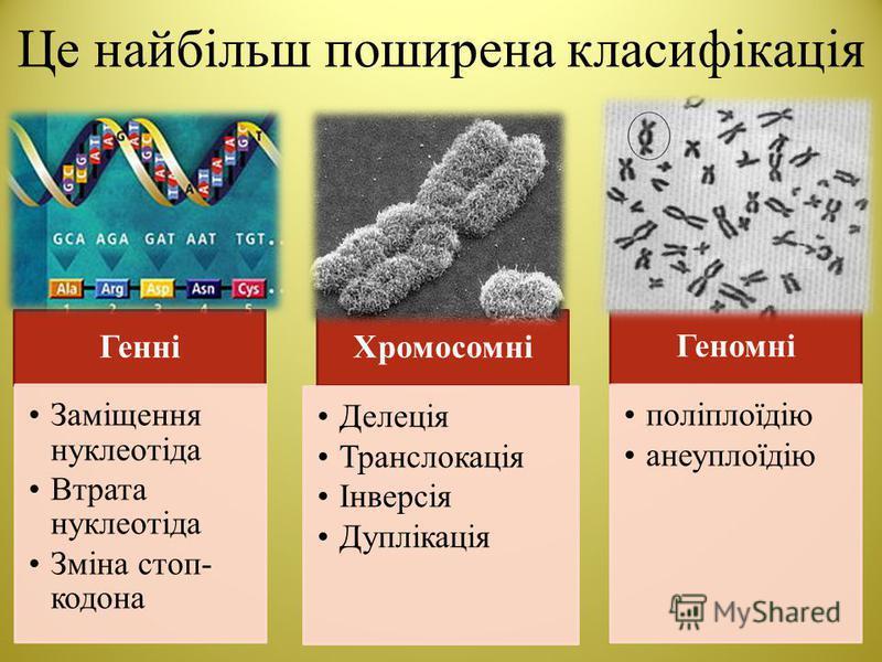 Це найбільш поширена класифікація Генні Заміщення нуклеотіда Втрата нуклеотіда Зміна стоп- кодона Хромосомні Делеція Транслокація Інверсія Дуплікація Геномні поліплоїдію анеуплоїдію