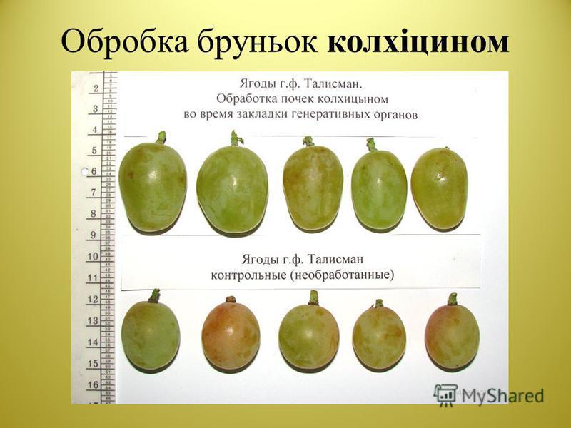 Обробка бруньок колхіцином