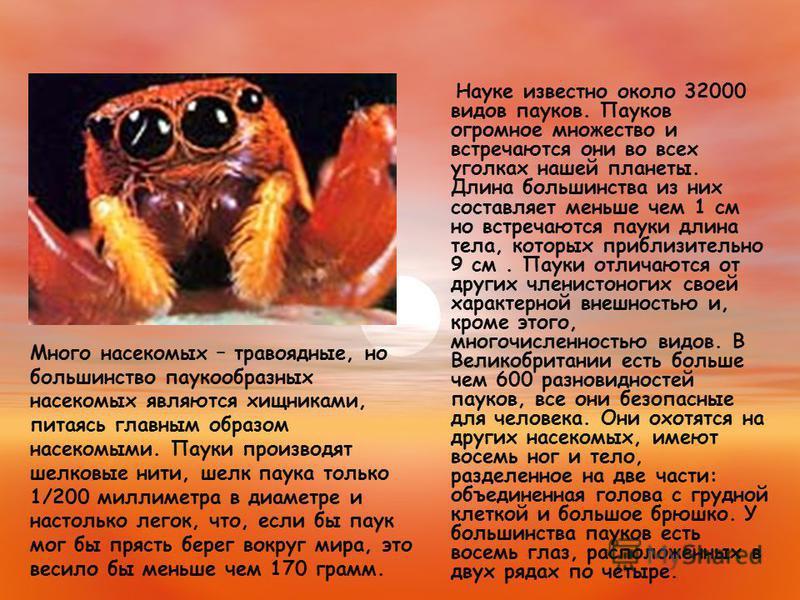Науке известно около 32000 видов пауков. Пауков огромное множество и встречаются они во всех уголках нашей планеты. Длина большинства из них составляет меньше чем 1 см но встречаются пауки длина тела, которых приблизительно 9 см. Пауки отличаются от